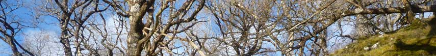 Tree-work-header_2